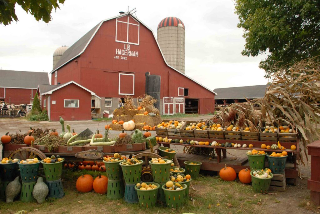 Hagerman Farm barn in background. A selection of pumpkins and gourds displayed in buckets and crates in foreground.