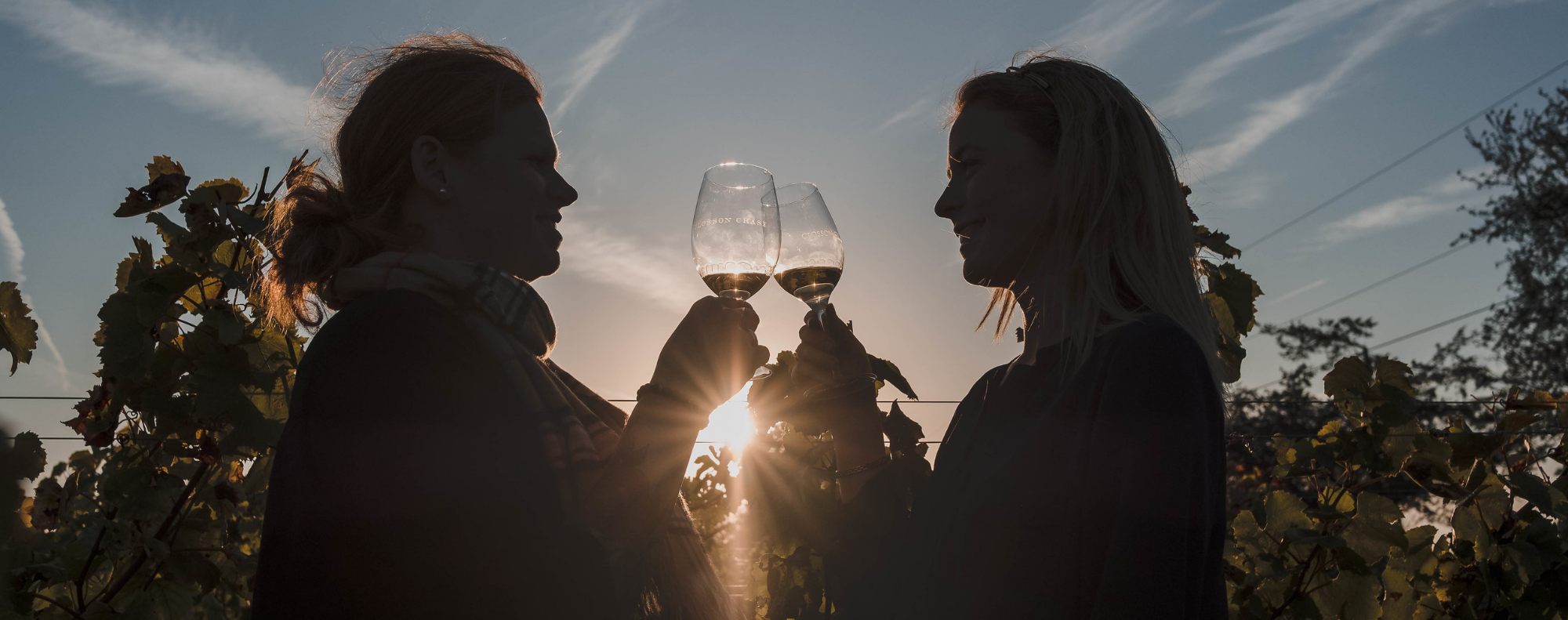 Two women in silhouette in foreground toast each other with wine glasses. Sun peeking through grape vines in background.