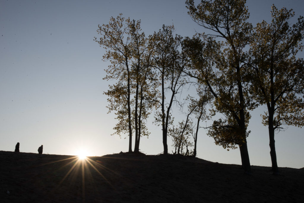 Hikers in silhouette on the dunes at Sandbanks, with Fall trees on the right. A sunbeam glares over the dunes against a blue sky.